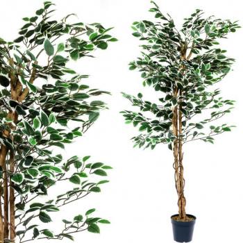 Umělá rostlina - fíkus jako živý, kmen z pravého dřeva, 160 cm