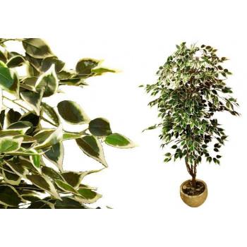 Umělá rostlina - fíkus jako živý, kmen z pravého dřeva, 185 cm