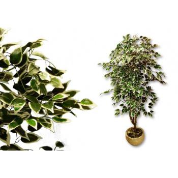 Umělá rostlina - fíkus jako živý, kmen z pravého dřeva, 150 cm