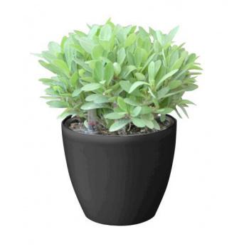 Menší kulatý samozavlažovací květináč venkovní / vnitřní, černý, 15 cm
