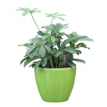 Ozdobný kulatý samozavlažovací květináč 17,5 cm, lesklá zelená