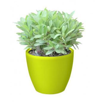 Ozdobný kulatý samozavlažovací květináč 15 cm, zářivě zelená