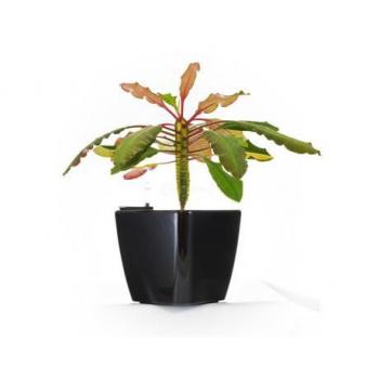 Čtvercový samozavlažovací květináč, iteriér / exteriér, 20,5 cm, černý