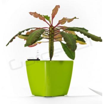 Dekorativní samozavlažovací květináč čtvercový  20,5 cm, zelený