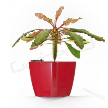 Dekorativní samozavlažovací květináč čtvercový  20,5 cm, červený