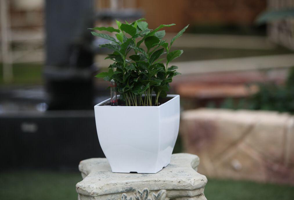 Okrasný samozavlažovací květináč čtvercový, lesklá bílá, 13,5 cm