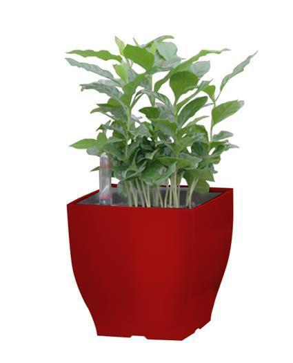 Samozavlažovací květináč čtvercový, venkovní / vnitřní, 13,5 cm, červený
