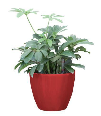 Okrasný samozavlažovací květináč venkovní / vnitřní, 17,5 cm, červený