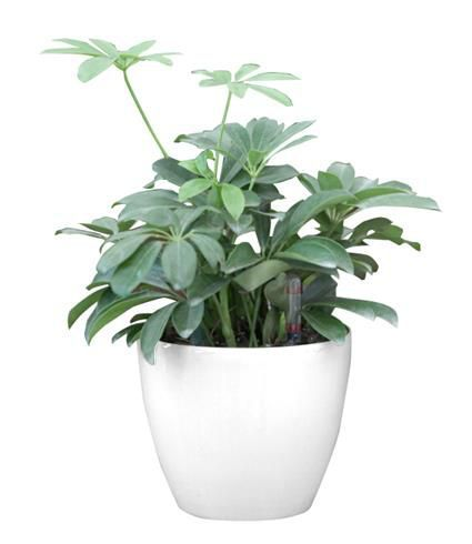 Okrasný samozavlažovací květináč venkovní / vnitřní, 17,5 cm, bílý